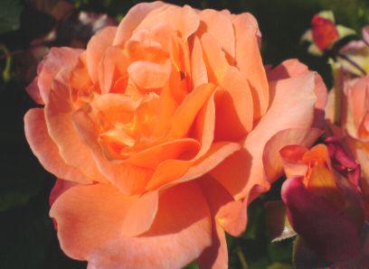 Z Różańcem Przez życie